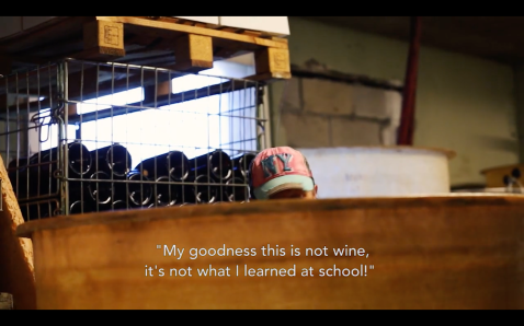 ROMAIN STAROS | Alice Bouvot - Portraits of Winemakers France0 (19)