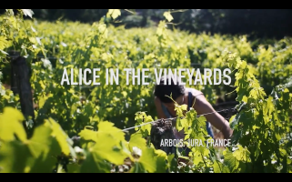 ROMAIN STAROS | Alice Bouvot - Portraits of Winemakers France0