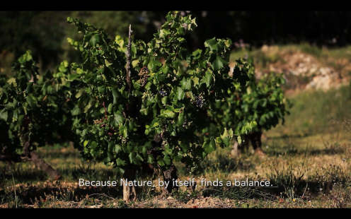 ROMAIN STAROS | Gregory Guillaume Ardéche - Portraits of Winemakers France0 (19)