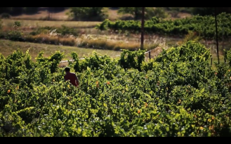 ROMAIN STAROS | Gregory Guillaume Ardéche - Portraits of Winemakers France0 (23)