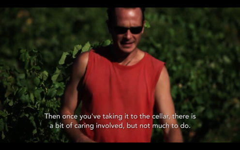 ROMAIN STAROS | Gregory Guillaume Ardéche - Portraits of Winemakers France0 (25)