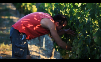 ROMAIN STAROS | Gregory Guillaume Ardéche - Portraits of Winemakers France0 (4)