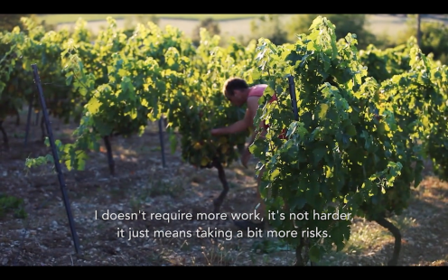 ROMAIN STAROS | Gregory Guillaume Ardéche - Portraits of Winemakers France0 (6)