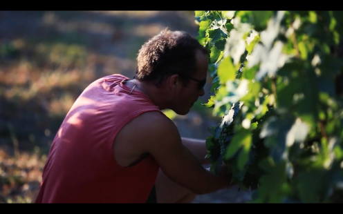 ROMAIN STAROS | Gregory Guillaume Ardéche - Portraits of Winemakers France0 (7)