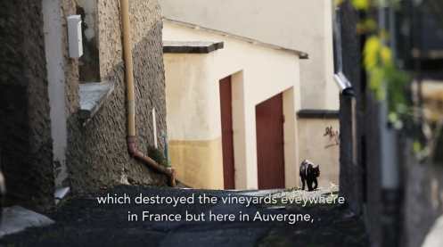 ROMAIN STAROS | Marie & Vincent Tricot - Portraits of Winemakers France0 (5)