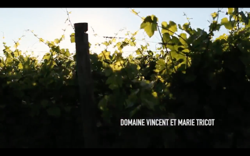 ROMAIN STAROS | Marie & Vincent Tricot - Winemakers France0 (2)